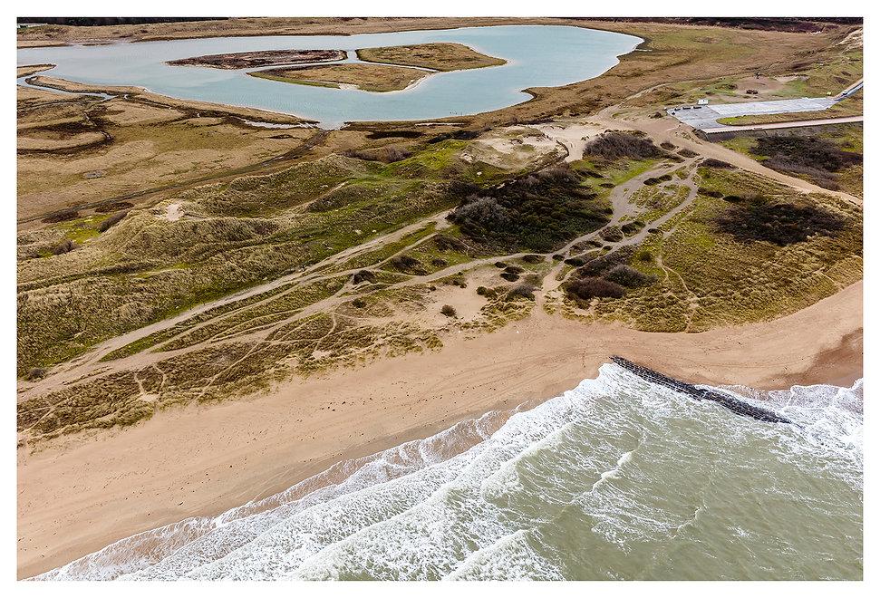 Knokke Beach Zwin Hare.jpg
