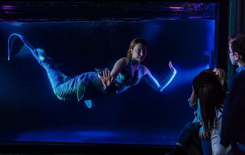 Mermaid Tank with stunning swimming mermaids