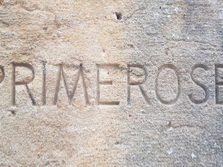 """Primerose"" l'histoire"