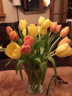 tulips feb 16