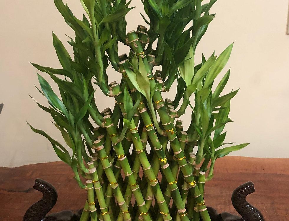 Bamboo Pyramid-Large