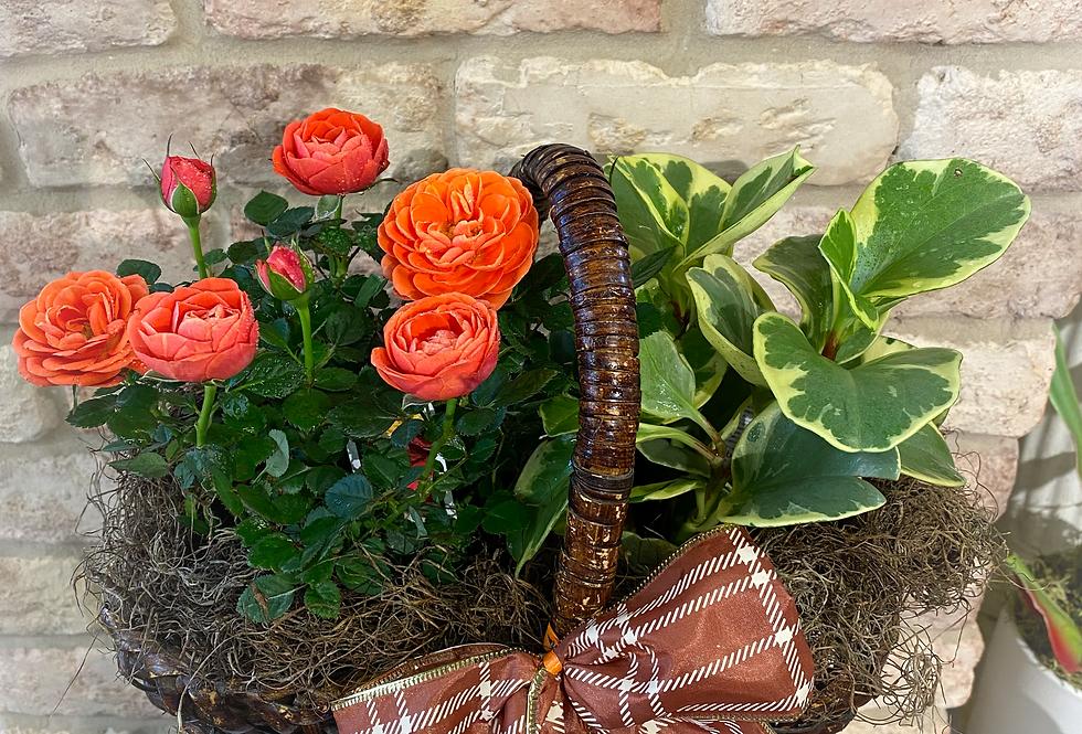 Seasonal Botanic Basket