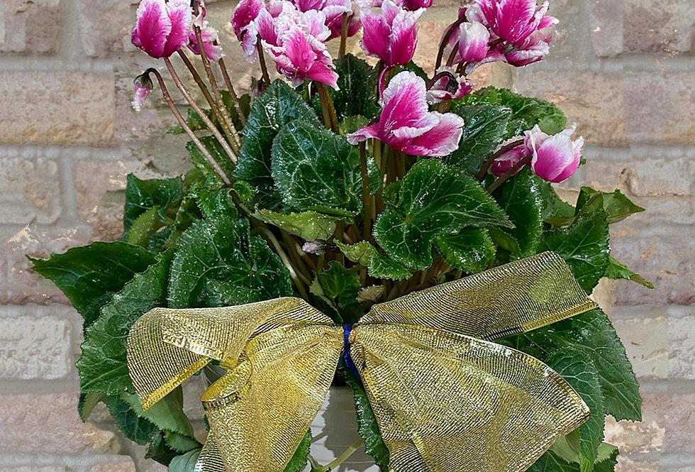 Potted Seasonal Flowers