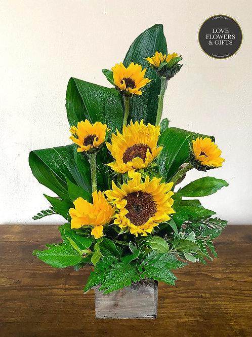 Love of Sunflowers Box