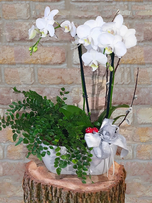 Orchids and Potted Plant