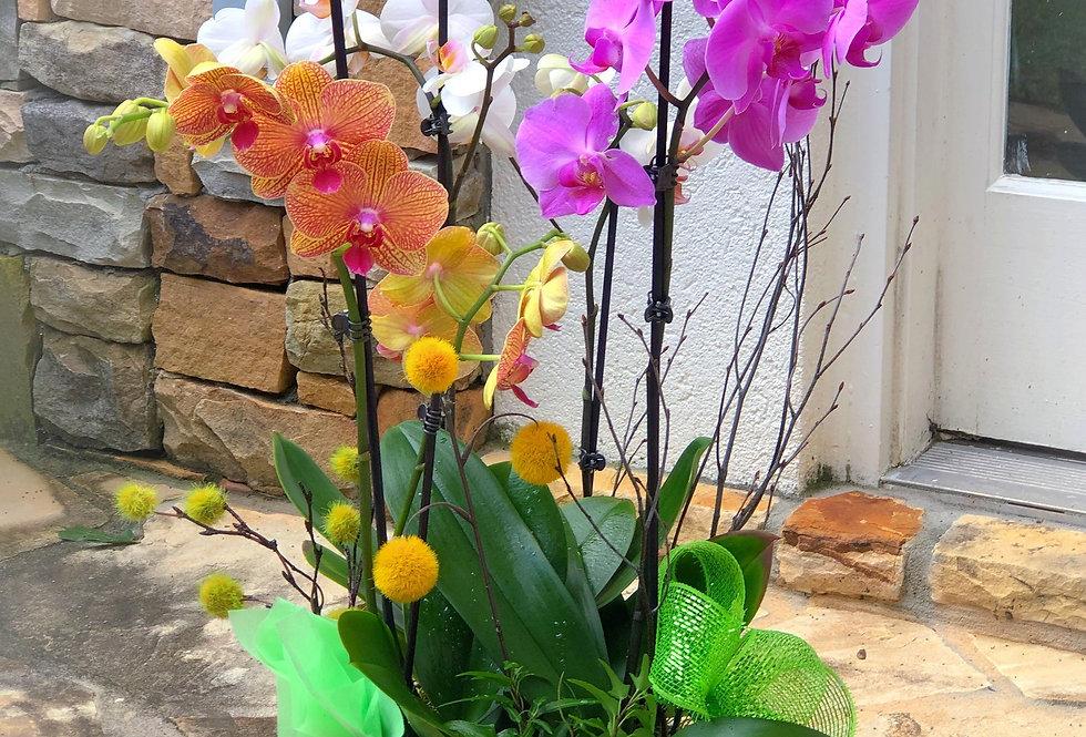 Assorted Orchids Arrangement