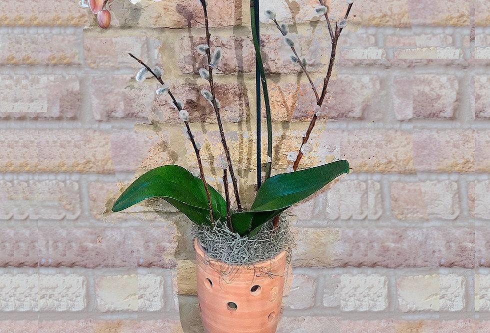 Pink Orchid Terracotta Pot