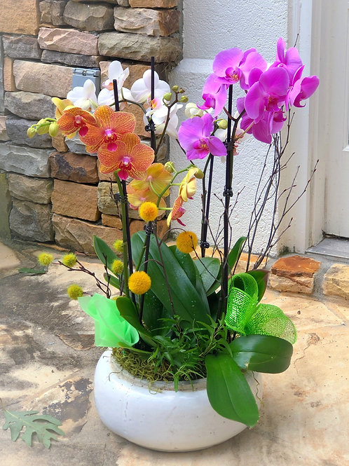Marvelous Orchids Arrangement