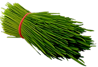 Fresh_Wheatgrass_400-PNG-Web-min.png