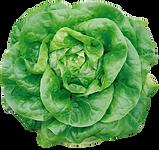 purepng.com-butterhead-lettucevegetables