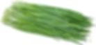 garlic-chives-information-recipes-and-fa