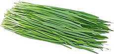 garlic-chives-information-recipes-and-fa