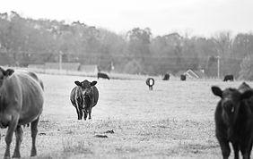 granite_ridge_farms_jtp2019-121_edited_e