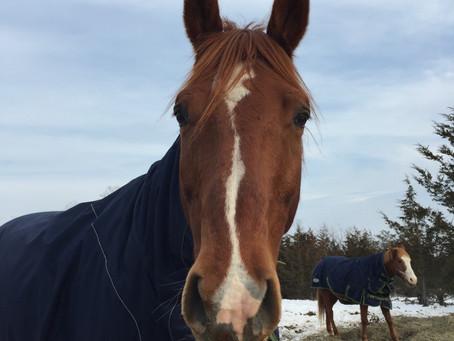 10 Habits of Happy Horse People