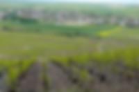 Parcellle Vigne Vine Naveau Bergeres Soils