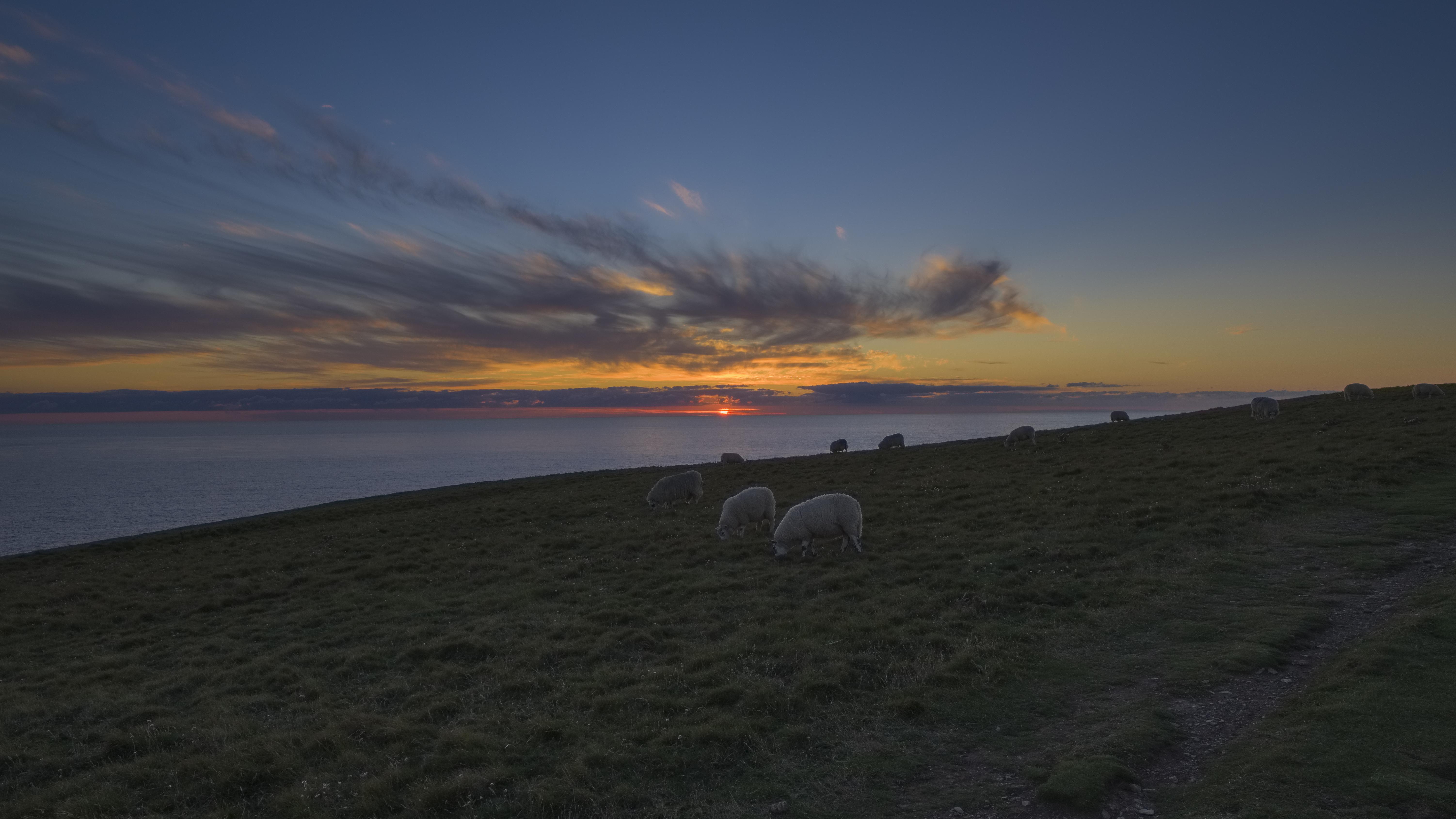 Coucher de soleil avec les moutons