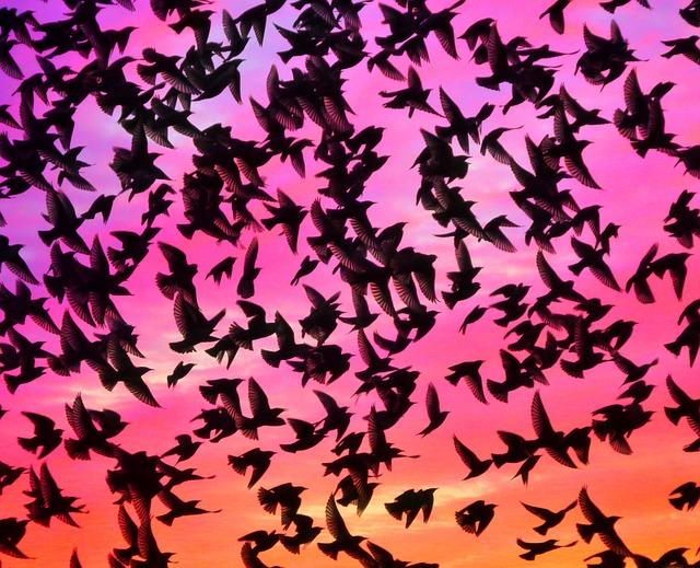 birds-633103_640