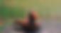 Screen Shot 2018-08-19 at 4.22.48 PM.png