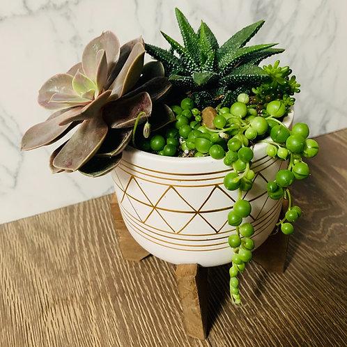 Modern Succulent Pot