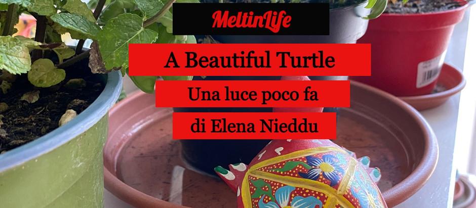 A Beautiful Turtle