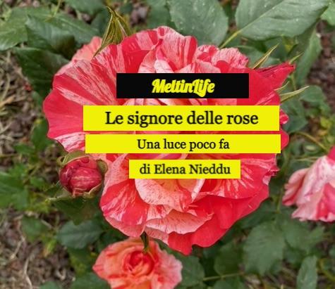 Le signore delle rose