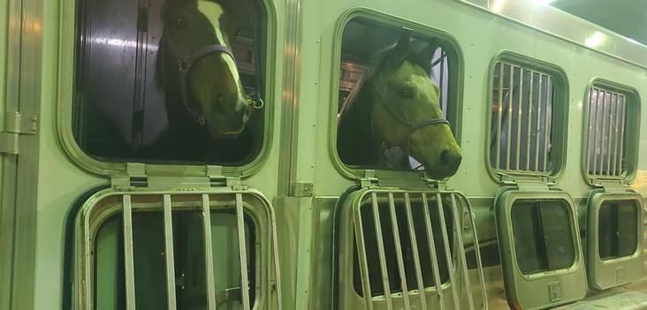 Happy race and pony horses