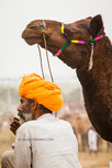 Pushkar Rajasthan 2.jpg