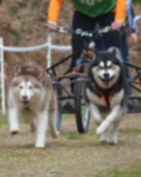Scarlett Guinness Thetford forest AMWA chainoship race 2014.jpg