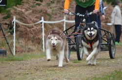 Scarlett Guinness Thetford forest AMWA chainoship race 2014