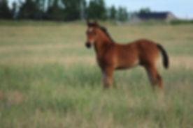 colt-in-field-4078876_1920.jpg