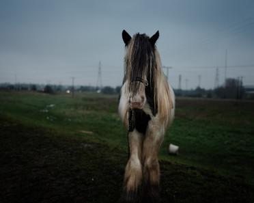 //HORSE POWER II