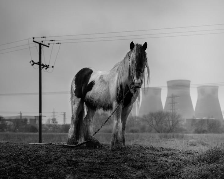 //HORSE POWER