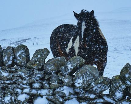 //SNOW HORSE
