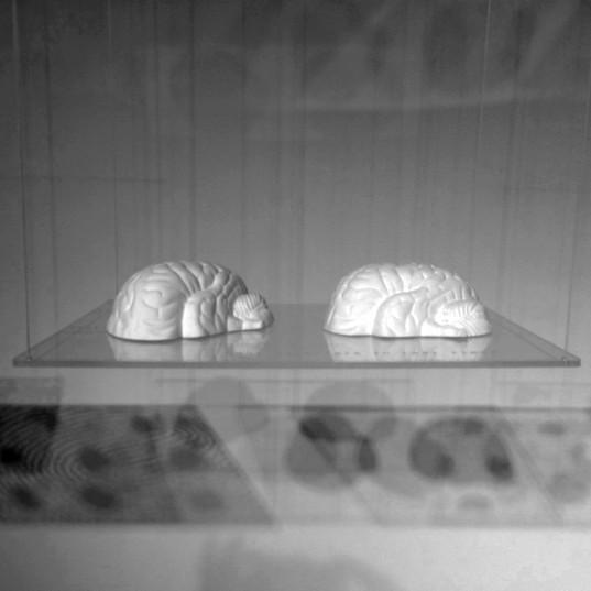 Detail Brains Ohr.jpg