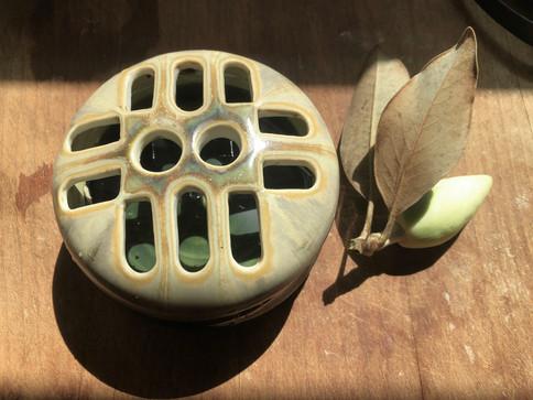 6. Magnolia Frog_.jpg
