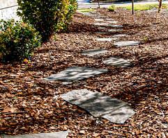 pathway-19.jpg