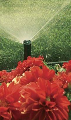 irrigation-03.jpg