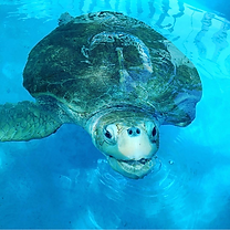 sea turtle conservation travel