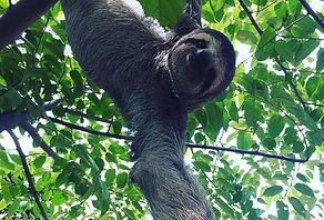 exotic animal restoration trip