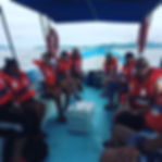 Mangrove River Boat Tours