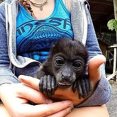 exotic animal rehabilitation travel