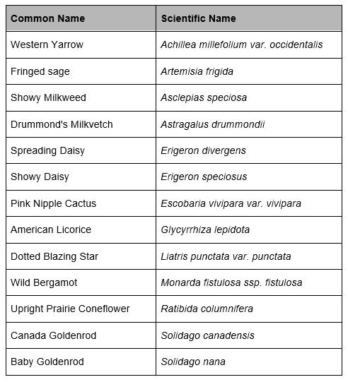 Rox Wildflower Species.PNG
