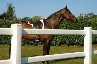 Horse Racing 2.jpg