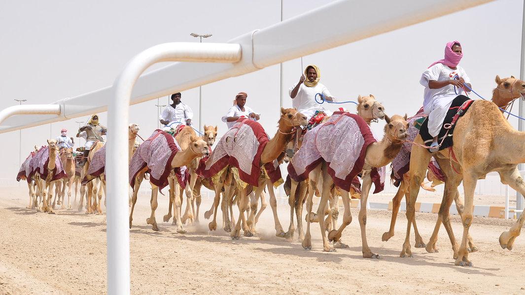 Camel Rail Banner.jpg