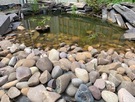 Garden Ponds for Wildlife