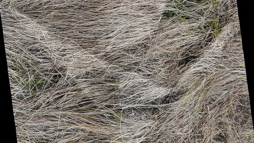 Insideout Overgrown