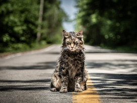 BREAKING | New 'Pet Sematary' May or May Not Be a Prequel Film...