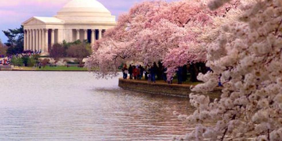 Sakura Matsuri DC