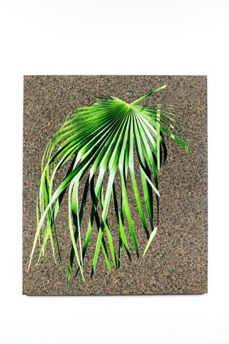 Untitled IV (Palm Darker)