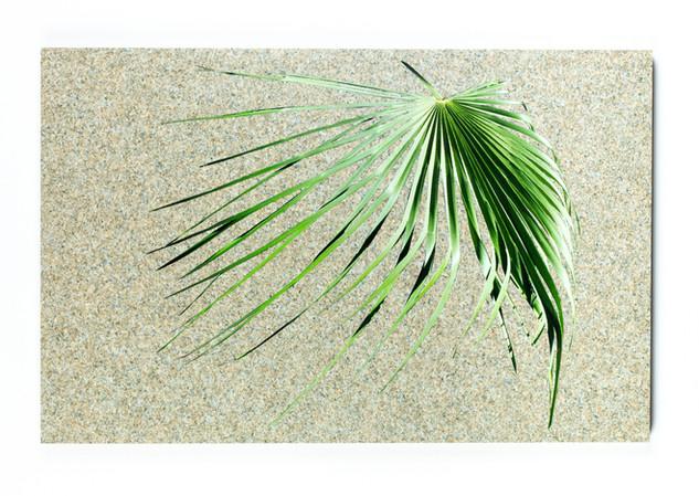Untitled I (Palm I)